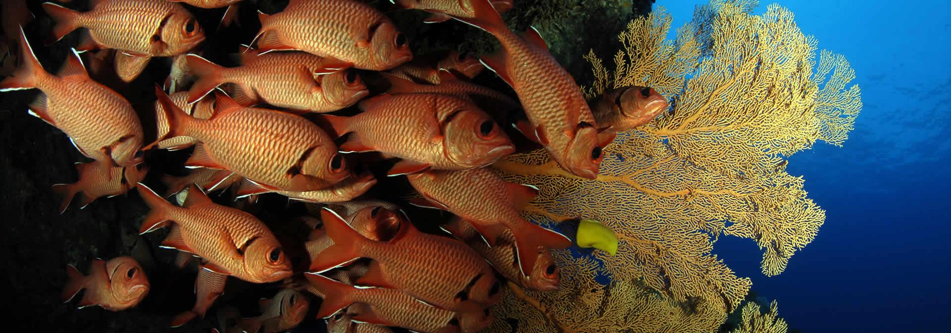 Buceo en Mauricio